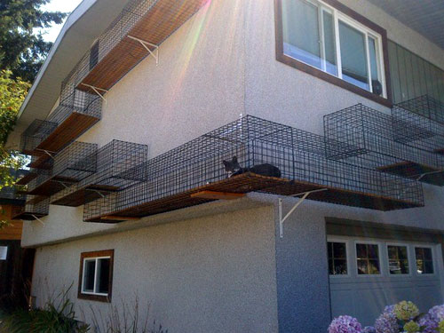 outdoor-cat