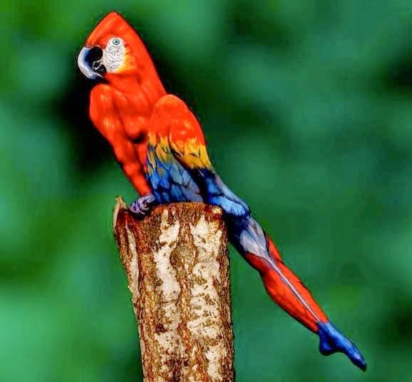 ParrotModelLOTF
