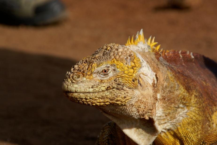 Galapagos 2007