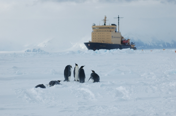 Antarctica 2005