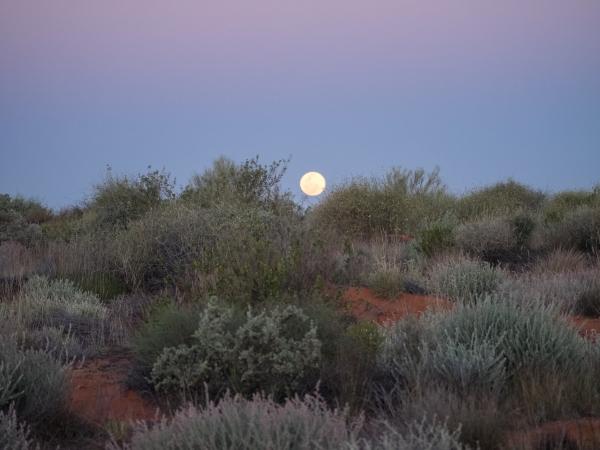 Moon rise over the saltbush