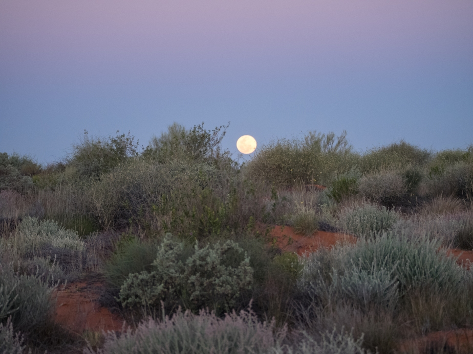 Moon rise over the saltbush